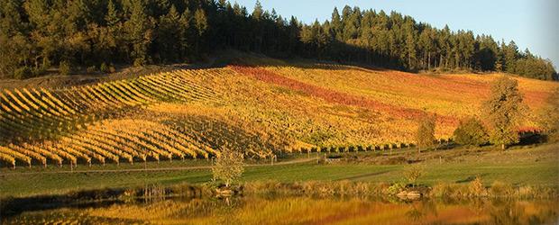 Reustle Prayer Rock Vineyard Is A Great Wine Tasting Experience Near Seven Feathers Casino Resort